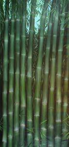 COMMISION FOR A PRIVATE ART COLLECTOR  OF BAMBUES THEMES  DESCRIPTION OF PROJECT : AN FINE ART COLLECTOR WAS LOOKING TO REPLACE A PAINTING IN HER HOME BESIDES FIREPLICE, THE IDEA WAS TO SKETCH A GREEN BAMBOO FOREST IN HYPERREALISTIC WAY. THE PROJECT WAS ACCEPTED .  DURATION OF PROJECT: 2 MONTHS  PLACE: ANTIGUA GUATEMALA, GUATEMALA CENTRAL AMERICA